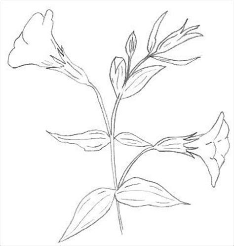 Outline Sketches Of Flowers by Easy Flowers To Draw