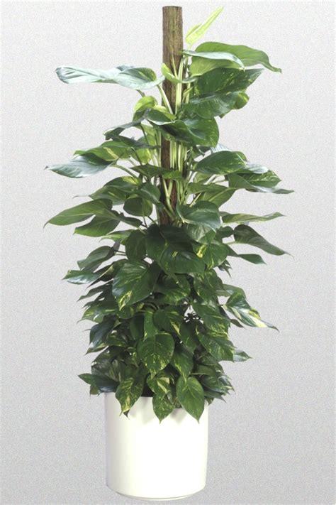 great indoor plants ten great indoor plants creative plant designs