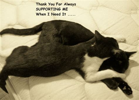 Thankful Cat. Free Inspirational eCards, Greeting Cards