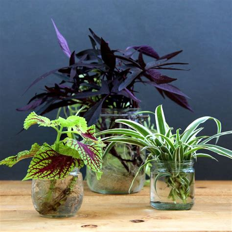 beautiful indoor plants grow beautiful indoor plants in water glass bottle