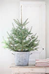 25 best ideas about potted christmas trees on pinterest