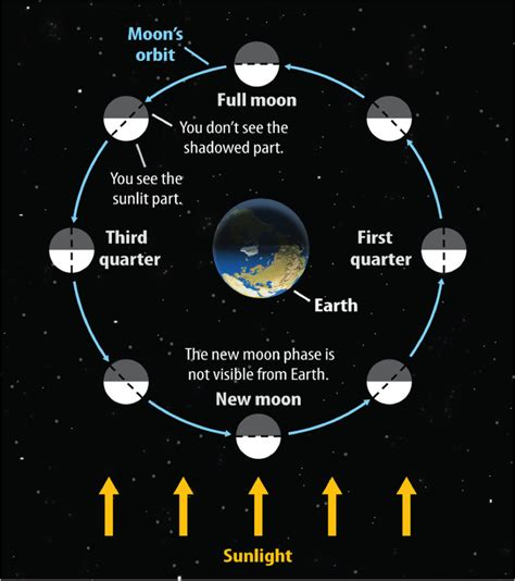 moon phases diagram image gallery lunar phases diagram