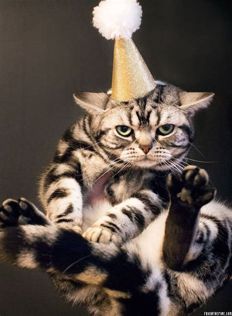 new year cat images 60 best new years cats images on baby kittens