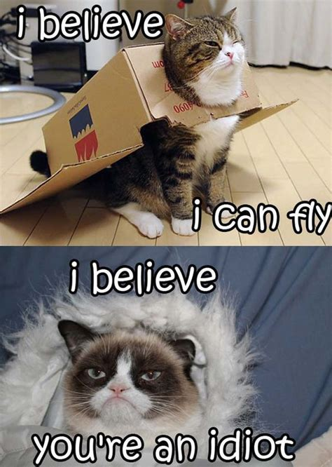 Funniest Cat Memes - best 25 funny grumpy cats ideas on pinterest grumpy cat