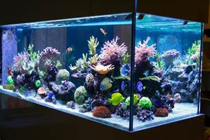 Aquarium For Home Home Aquariums Enviropacs