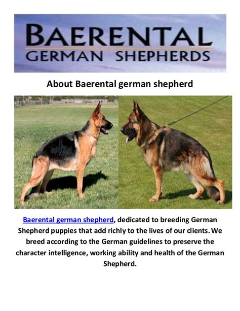german shepherd puppies for sale houston baerental german shepherd puppies for sale houston