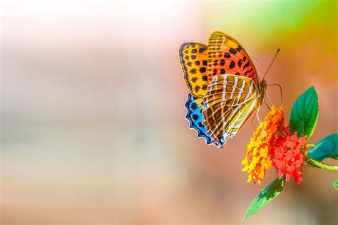 colorful butterfly wallpaper free download colorful butterfly over colorful flower wallpaper best
