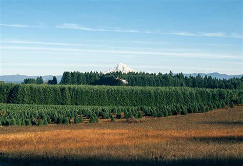 best 28 high christmas tree farm nc christmas tree