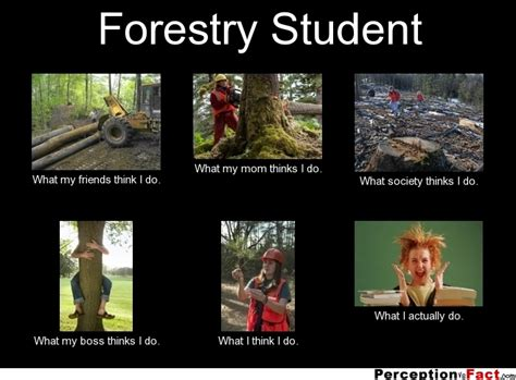 What Do Meme - forestry student what people think i do what i