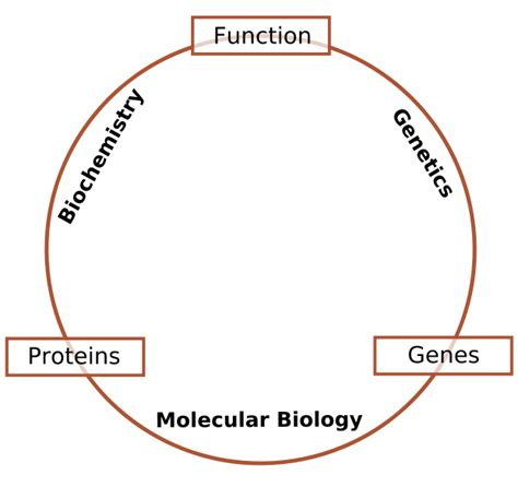 biography definition biology history of molecular biology bitesize bio