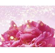 梦幻背景花卉 4  天彩之音 隨意窩 Xuite日誌