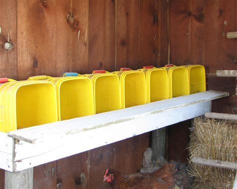 chicken update parsons prairie farm