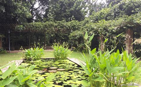 12 Hidden Spots Within Singapore Botanic Gardens That You Plants In Singapore Botanic Gardens