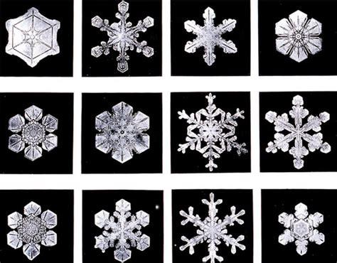 snowflake wilson bentley hey mommy chocolate milk a snowflake authority bentley