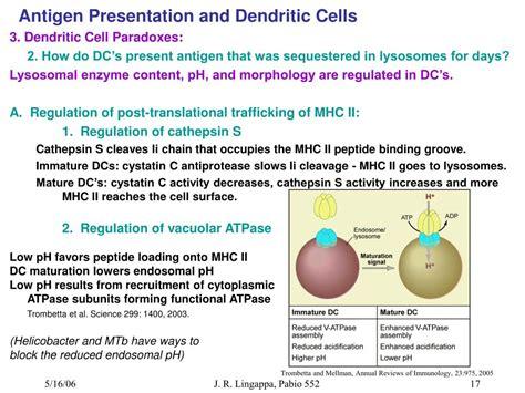 antigen presentation dendritic cell www ppt antigen presentation and dendritic cells powerpoint