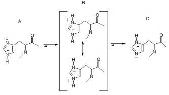 Protonated Imidazole Get To Histidine