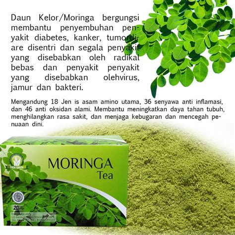 teh moringa herbal sahabat muslim