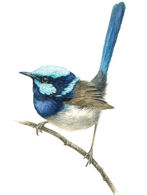 blue wren tattoo designs troughton