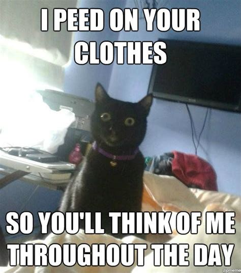 Pee Meme - overly attached cat strikes again weknowmemes
