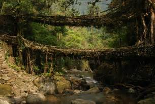 living bridges picture of the day living root bridges of meghalaya india 171 twistedsifter