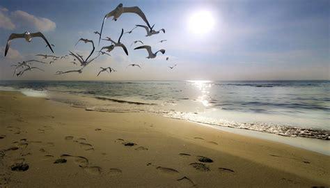 gabbiano mare gabbiani i pensieri scritti