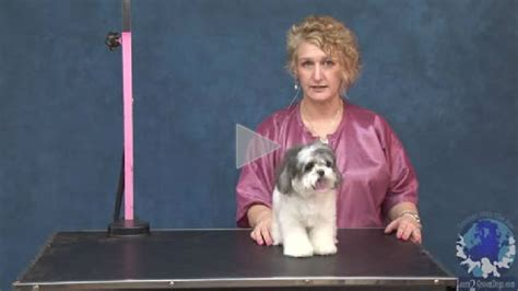 grooming a maltese shih tzu mix in a plushy guard comb