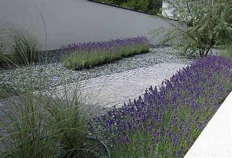 winterharte gräser für balkon lavendel im vorgarten impressionen moderne grten nowaday