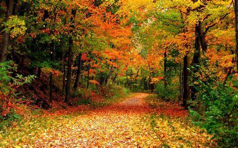 Rote Blätter Baum 4770 by Die 83 Besten Herbst Wallpapers