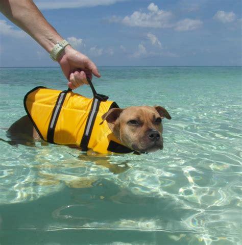 dog boat life jackets animal life jackets www topsimages