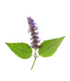 Wholesale Flowers Delivery - patchouli organic organic essential oil neal s yard