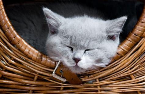 katze macht pipi ins bett vogel weckt katzenkumpel