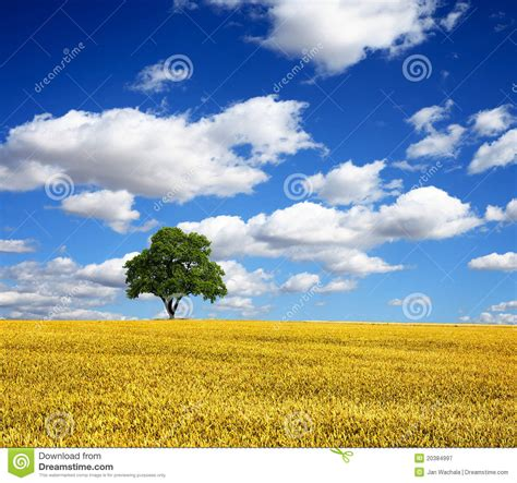 stock photos pictures royalty free summer landscape royalty free stock photography image 20384997