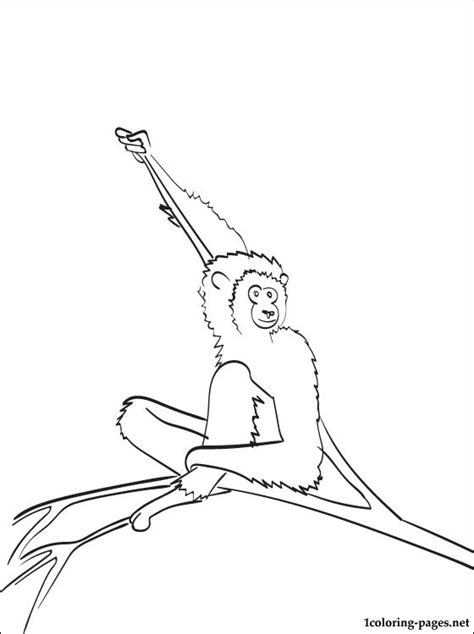 coloring page gibbon coloring pages