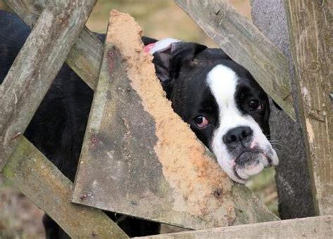 list of puppy mills in pa puppy mill awareness day september 19 animal bliss