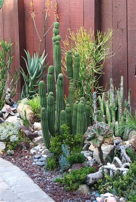 1248 best endless succulent ideas images on