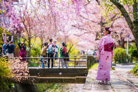 1 day kyoto cherry blossom walking itinerary travel caffeine
