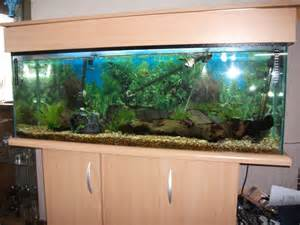 fish plus 4ft fish tank with everything   Dunfermline, Fife
