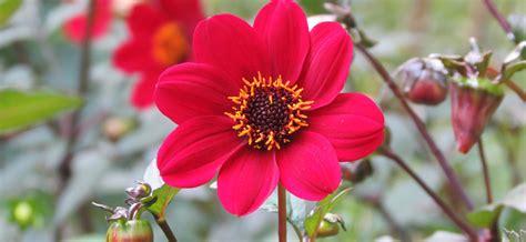 Que Planter En Septembre by Fleurs L 233 Gumes Quoi Planter En Septembre Ooreka