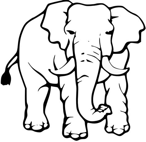 elephant 94 animals printable coloring pages baby lion clipart black and white clipart panda free