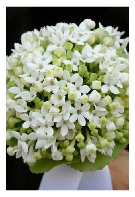 bouquet fiori d arancio e bouquet fiori d arancio idee per il matrimonio