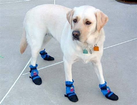 puppy booties german dogs to wear shoes news article