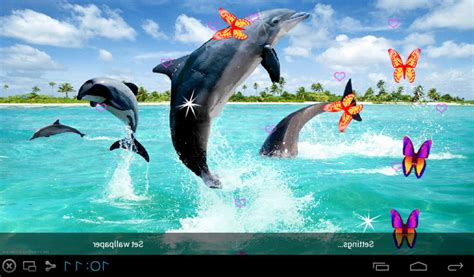live wallpaper for pc touch screen free 3d dolphin live wallpapers apk download for android