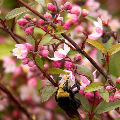 images  trees  shrubs  pinterest shrubs