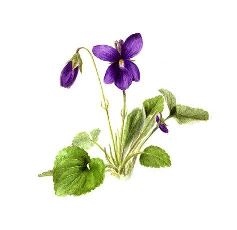 sigrid frensen sweet violet