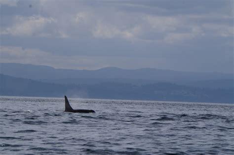 Mba Program Near San Juan Island by Detecting Killer Whales By Using Dna Acoustics Program