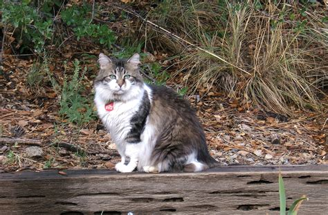 the joys of feral cats nancy windheart