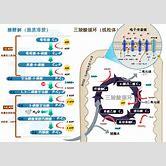 mitochondria-cellular-respiration