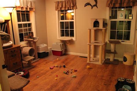 cat room the laughing raccoon the cat room is done