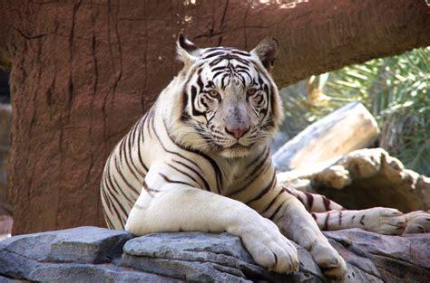 emirates zoo timing chiang mai night safari entrance pass kkday com