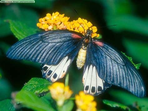 imagenes de mariposas multicolores fotos de mariposas i